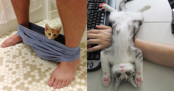 「そこジャマなんだが・・・」パーソナルスペースを理解してくれない16匹の猫