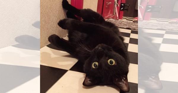 【今日のにゃんこ】大きくなっても子猫気分が抜けない「ルイちゃん」