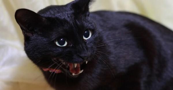 【あなたのパートナーは何色?】猫の気性の荒さは毛の色に関係があった!