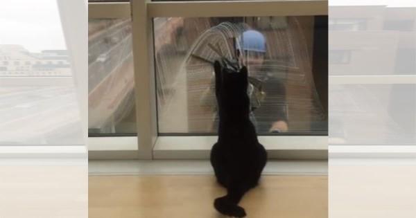 微笑ましくなる光景!窓ふきをするおじさんと黒猫の愉快なやり取りにほっこり