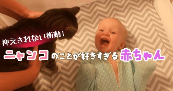【動画】赤ちゃんと猫はとっても仲良し!しっぽを見ただけで大はしゃぎ