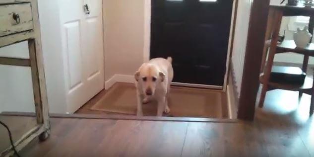 躊躇犬キャプ (1)