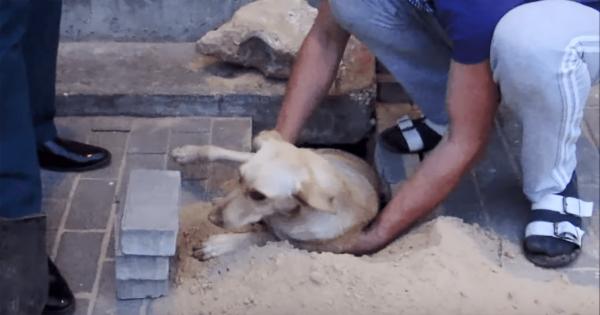 2日間 道路の下に閉じ込められた犬!ある家族の救出劇に感動
