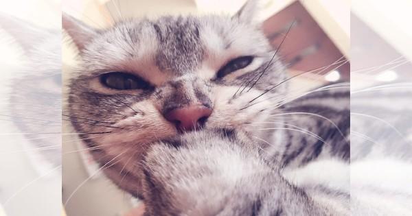 【今日のにゃんこ】上品で女子力の高いお姫猫「ひめちゃん」