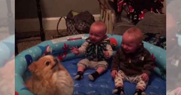 すごく楽しそう!双子の赤ちゃんがワンコ見て爆笑しててかわいい