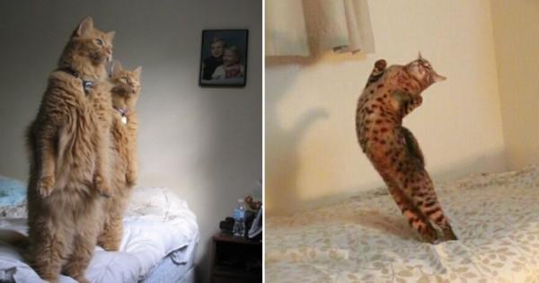 猫は実は姿勢が良いって知ってましたか?(画像12枚)