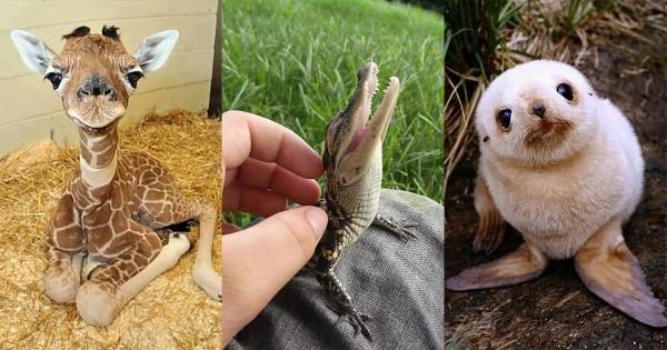 思わず二度見した!小さすぎて驚く動物たちの赤ちゃんたち16選