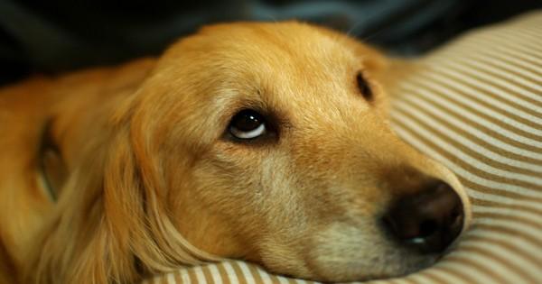 犬に振り回されている人の16の特徴