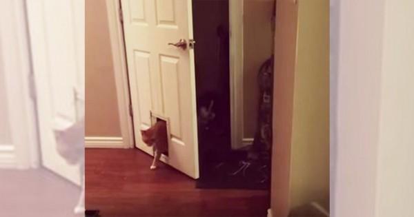 結局そっちかよ!自力でドアを開けるも猫用ドアから入ってくるニャンコに総ツッコミ