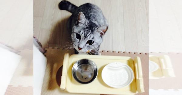 【今日のにゃんこ】凛とした目がかわいい家一番の食いしん坊「凛太朗ちゃん」