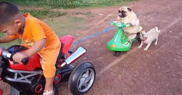 ちょっと待って!おもちゃの車から落っこちたワンコの必死な姿に笑っちゃう