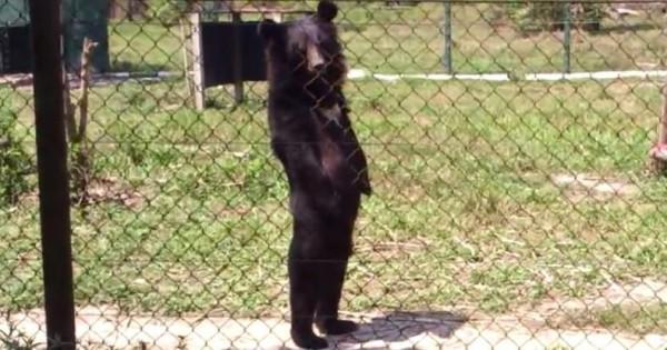 絶対中に人が入ってるだろ!(笑) 二足歩行で歩くクマのスタイリッシュすぎる姿にビックリ