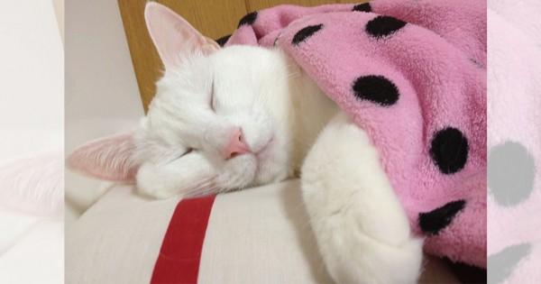 【今日のにゃんこ】天使のような寝顔が愛おしい「ももちゃん」