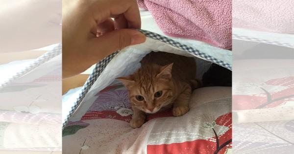 【今日のにゃんこ】守りたくなる怖がり猫「ウェリナちゃん」