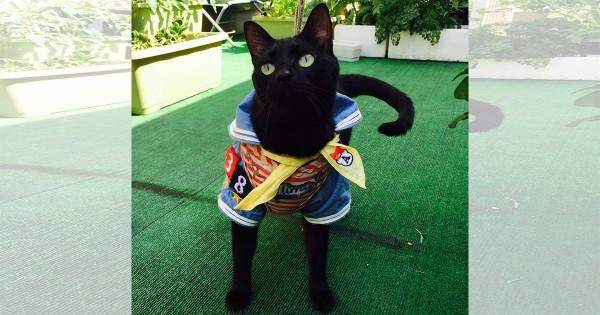【今日のにゃんこ】黒い毛並みが美しいイケメンモデル「ラッキーちゃん」