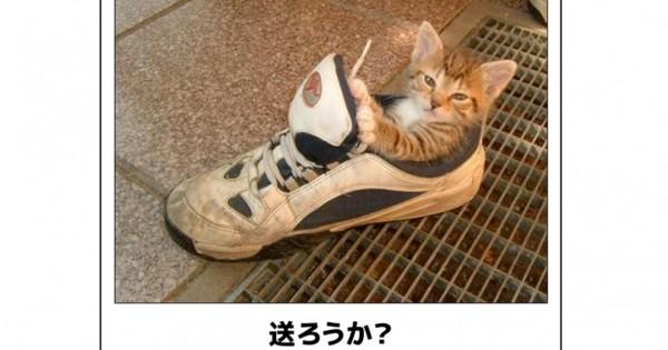 あなたをきっと笑わせる!明日からの元気がもらえる猫の傑作ボケて15選