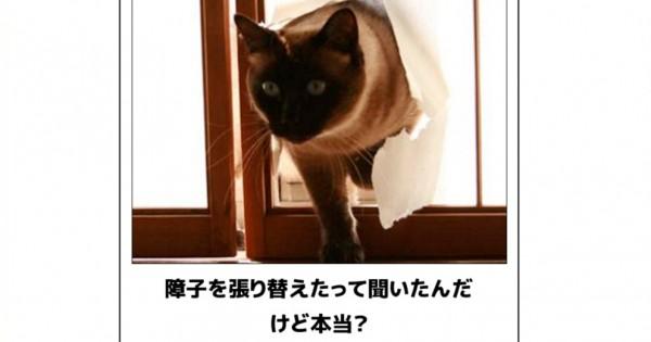 2秒で笑う!寒さもふっ飛ばしちゃう猫の爆笑ボケて15選
