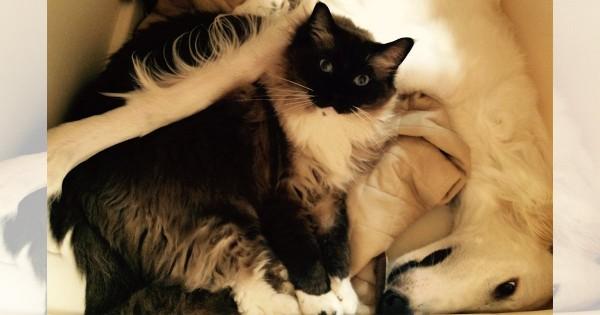 【今日のにゃんこ】にぎやかに暮らすたぬき猫「豆ちゃん」