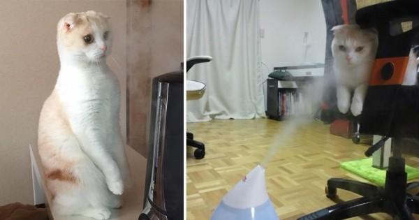 ニャにかいる・・・!加湿器に翻弄される猫たち10選