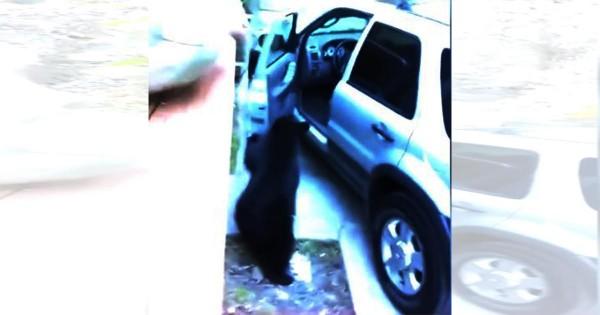 これは予想外!車のドアを勝手に開けて中に侵入するクマにビックリ