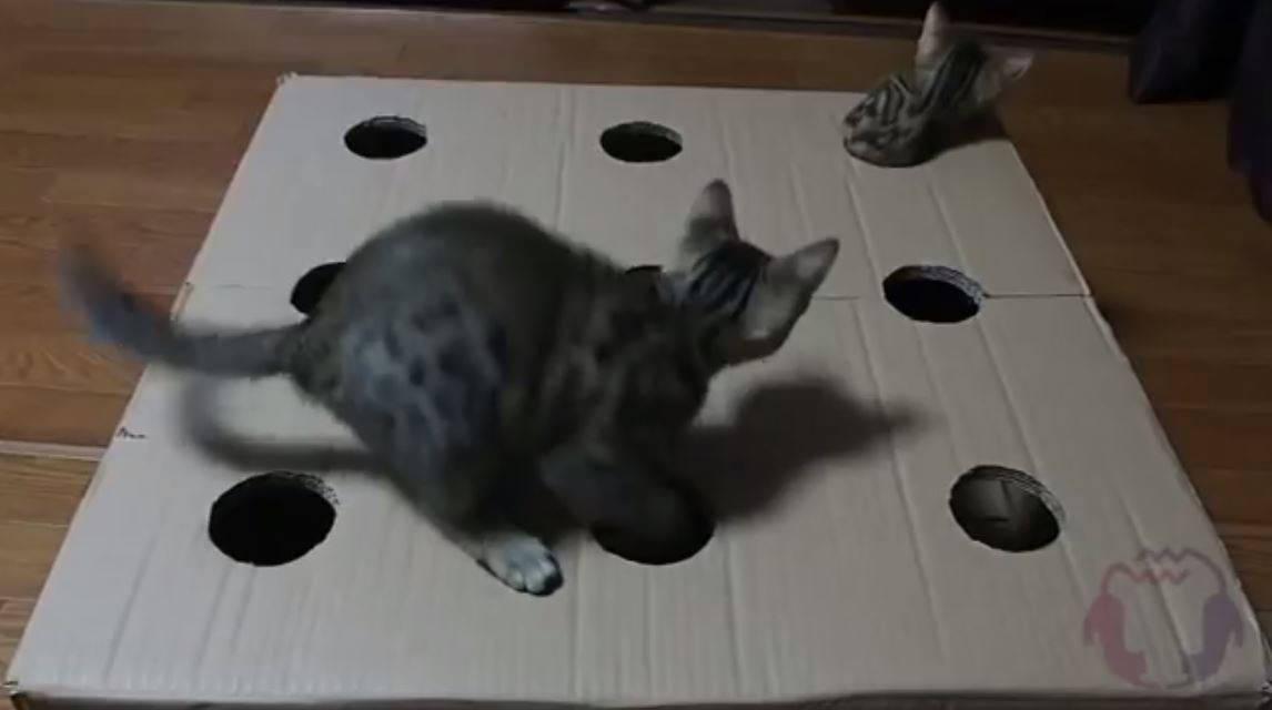 猫たたき (1)