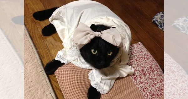 【今日のにゃんこ】家族に愛されながら天国へ旅立った食いしん坊猫「くうちゃん」