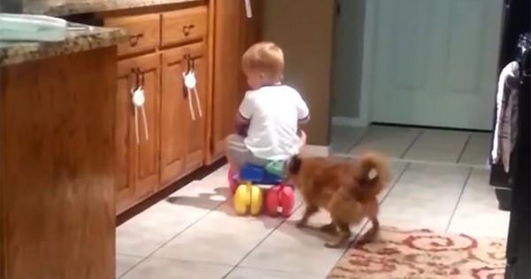 大きいボールと勘違い?子どもが乗っている車のおもちゃをパパが押したら犬が謎の行動に出た