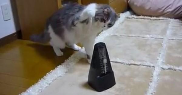 猫「にゃ、にゃ、にゃ、にゃ、にゃんだこれ?」メトロノームで小刻みに震えるニャンコに吹き出す