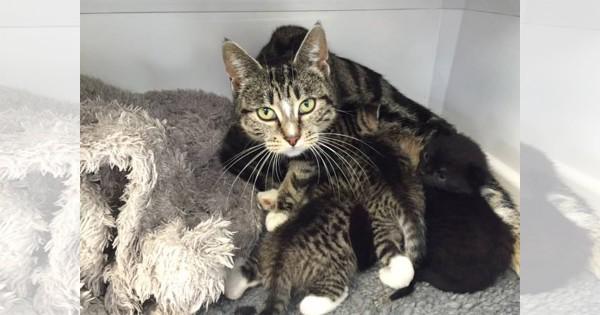 「うちの子、ここにいませんか?」捨てられた子猫を探しに来た母猫のお話