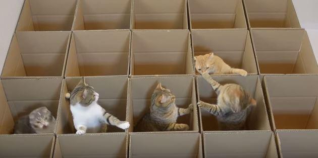 猫キャプ2 (1)