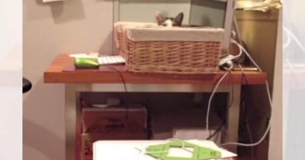 ボクも乗りたいにゃ~・・・。ご主人の膝に座る猫を、羨ましそうに見つめるニャンコがシュールすぎる