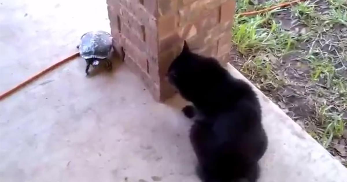 猫 カメ 遊ぶ3