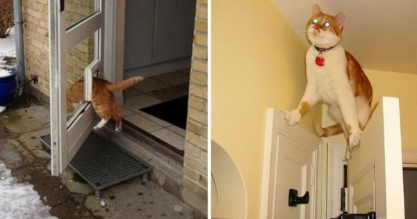 猫界では日々「珍事件」が起こるとわかる12枚の画像