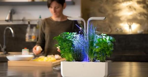 【インテリアにもなる】水やりも日光も完全自動な家庭菜園マシンが登場!