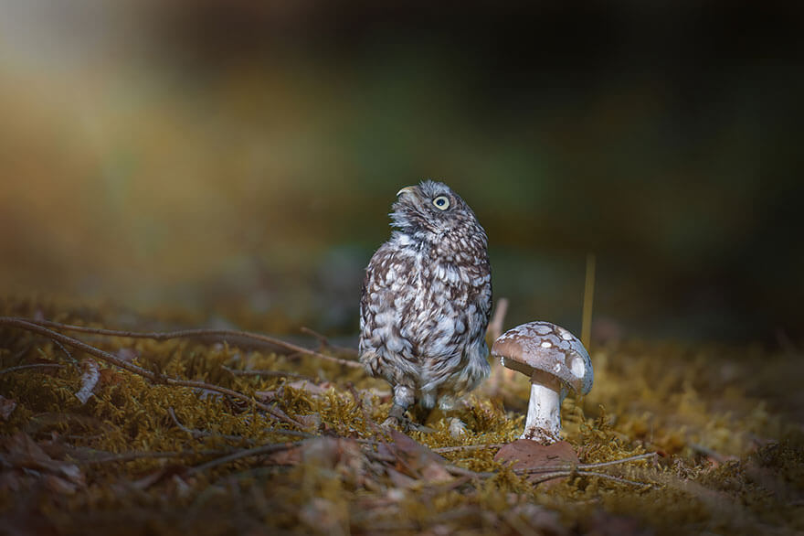 owl-and-mushrooms-tanja-brandt-4__880