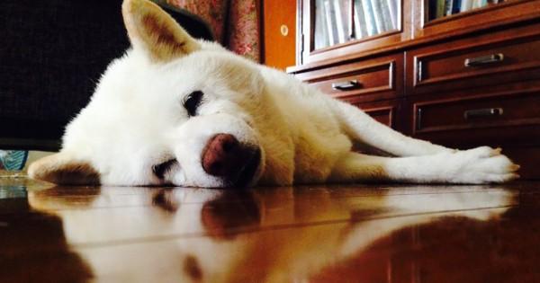 過ごした時間が愛を育てる!子犬に負けてない「老犬」の魅力に胸がトキメク