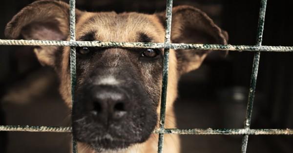 悪徳ブリーダー撲滅!ペットショップで保護された犬猫しか販売出来ない法律が始まった