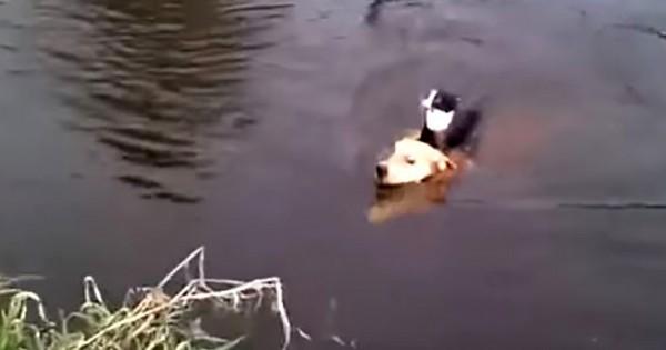 ヒーロー見参!川で溺れるニャンコを救出したカッコよすぎるワンコに拍手
