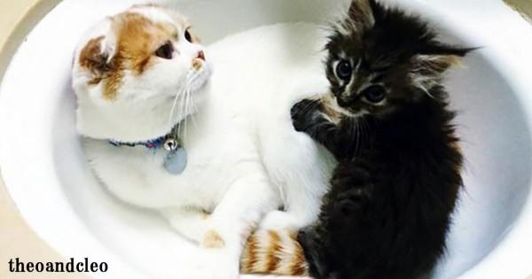 「家族になろうよ」保護された捨て猫のために、父親になることを決意した先住猫