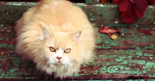 人間は猫に洗脳されていることが判明