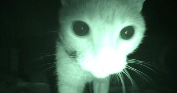 【深夜は猫の大運動会】ご主人が寝静まった後、ニャンコたちが野生の本性をあらわした!