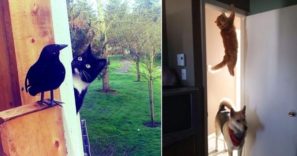 【こちらミッション遂行中】猫はスパイである12選