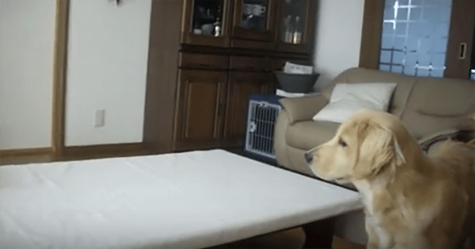ビビる犬2a (1)