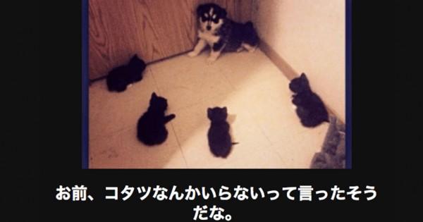 【ふいうち注意】笑えて元気が出る傑作アニマル大喜利14選