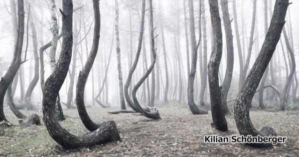 一体ここで何が・・・。謎の「ゆがめられた森」がミステリアスすぎて震える