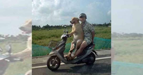たまには運転したいワン!バイクで走り出したくなるオモシロ画像13選