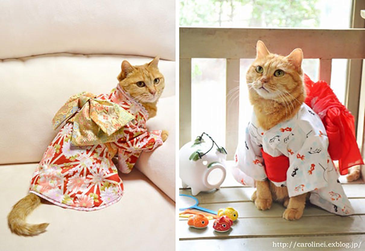 adorable-cat-sweets-laura-caroline-ingalls-16