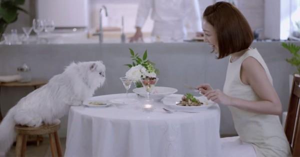 愛猫と至福の時間を!自宅で猫と一緒に高級フレンチを楽しめるサービスが登場