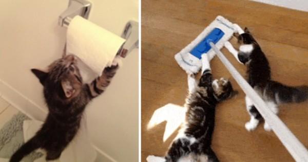 【ねこホイホイ】猫たちが反応せざるを得ないモノ14選