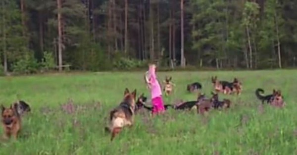 まるでおとぎ話の世界みたい!草原で楽しそうに遊ぶ女の子と14匹のシェパードたちが微笑ましい